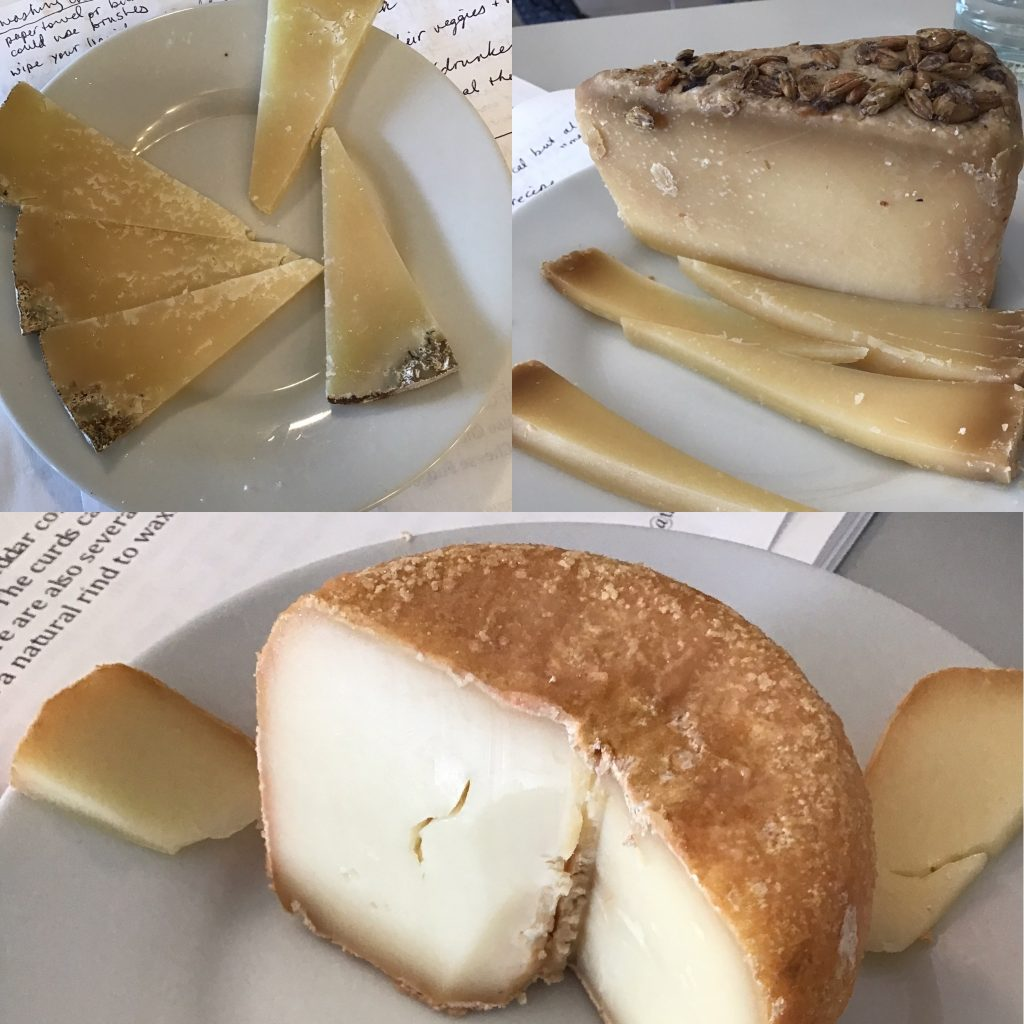 Haystack Gold Hill, new flavor cheese from Haystack, and Haystack Red Cloud