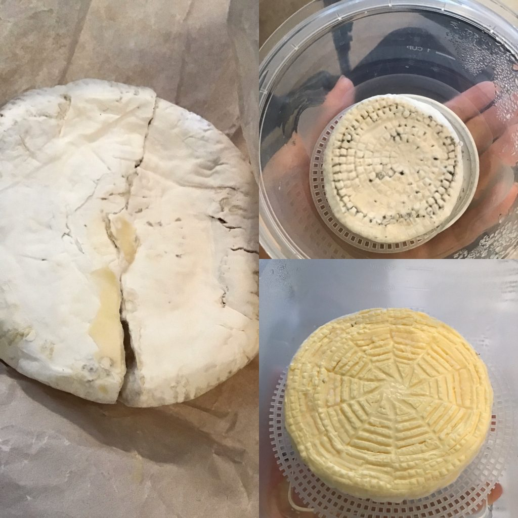 camembert wheels going through the aging process