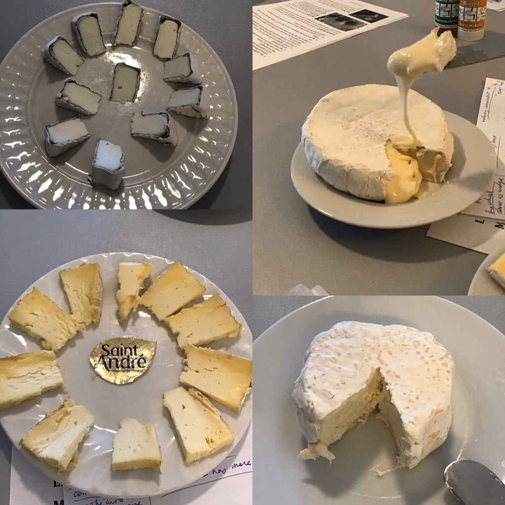 examples of bloomy rind cheeses during cheese tasting